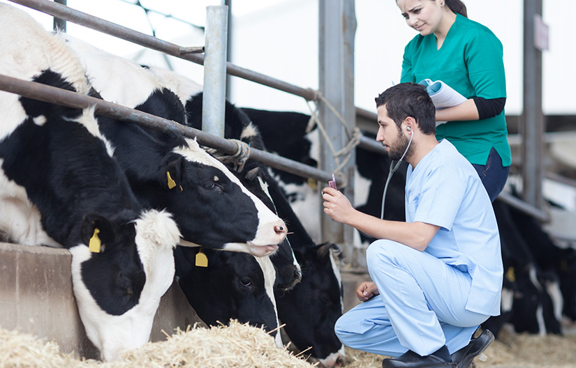 New Bovine TB Vaccine Breakthrough
