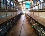 herdsperson-organic-dairy-business-310-cows-nantwich-cheshire-rsweb1874 image