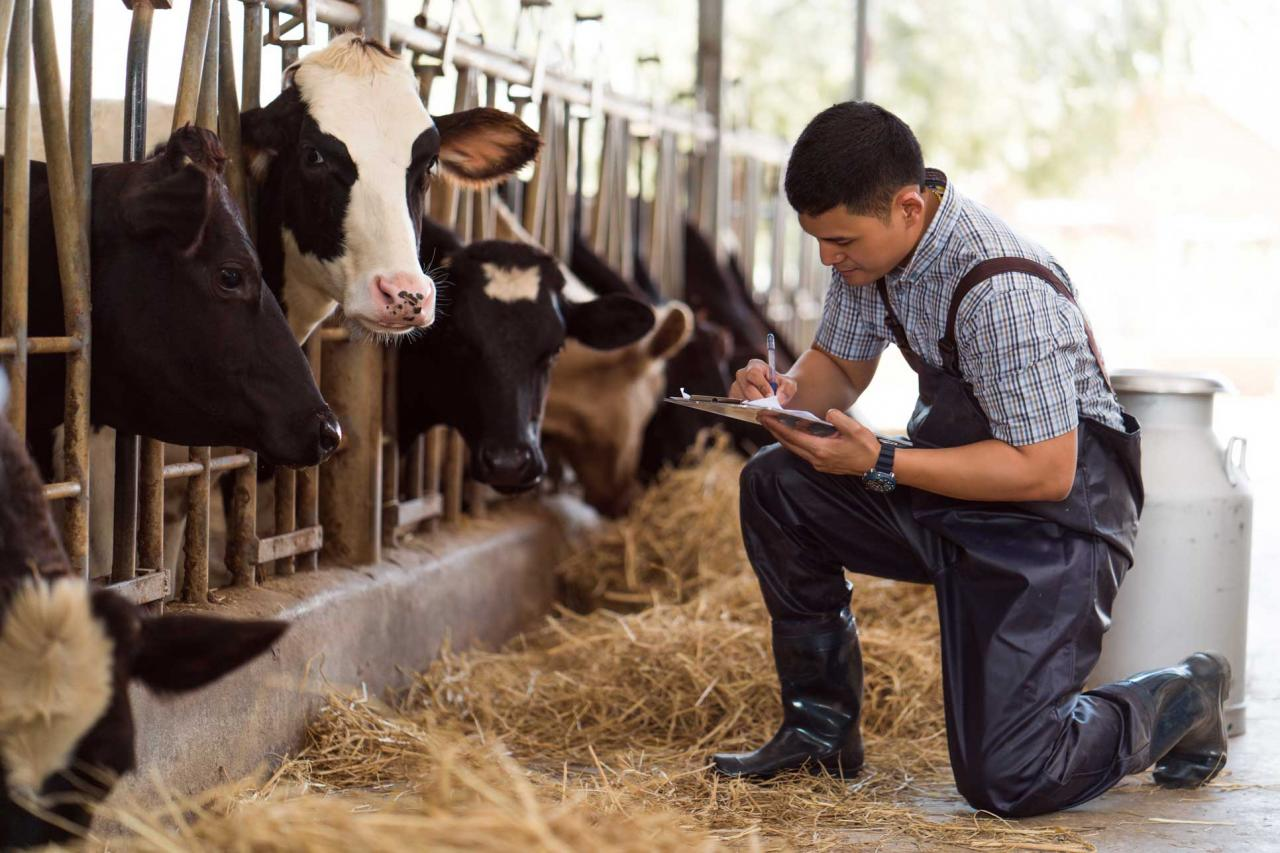 Dairy Management Academy | LKL Services